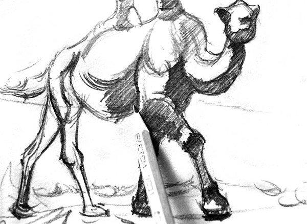 素描:骆驼的绘画步骤(3)