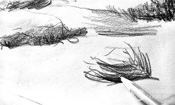 学画画 素描教程 素描动物 > 素描:骆驼的绘画步骤(3)      9,开始