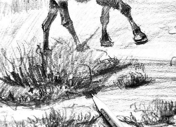 素描:骆驼的绘画步骤(6)