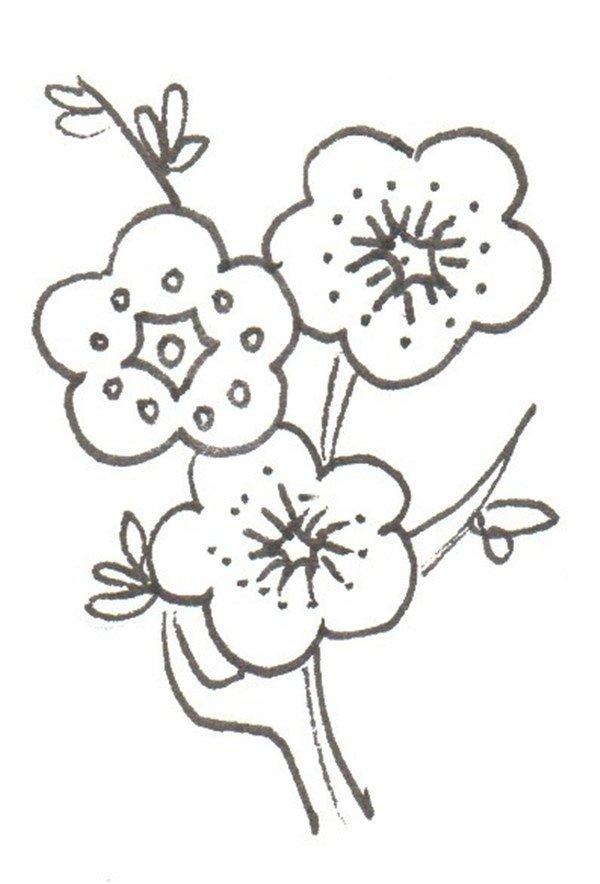 卡通画:梅花的绘画步骤(3)