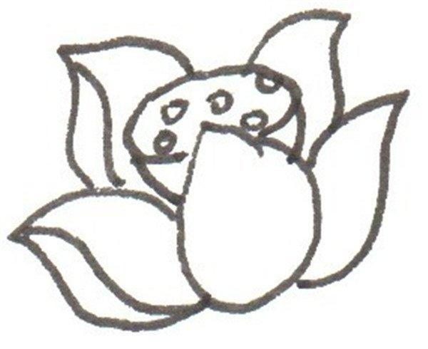 卡通画荷花的绘画步骤二                      ②在中间画莲蓬.