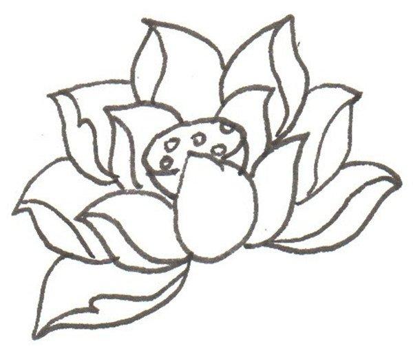 卡通画:荷花的绘画步骤(4)_儿童画教程_学画画_我爱