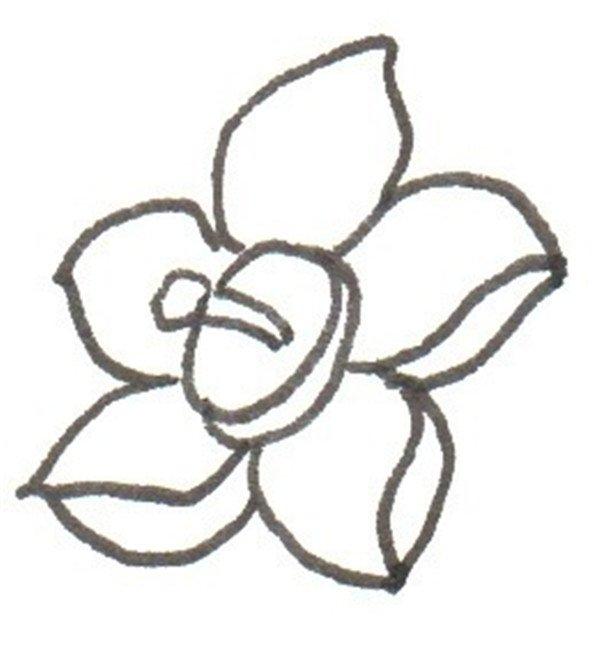 卡通画:水仙花的绘画步骤(2)