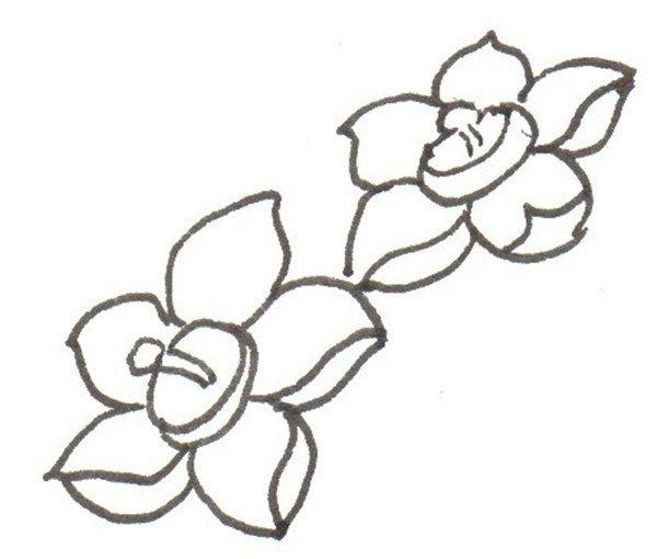 卡通画:水仙花的绘画步骤(3)