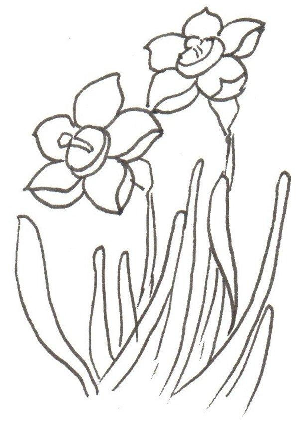 ④加叶子。  卡通画水仙花的绘画步骤四