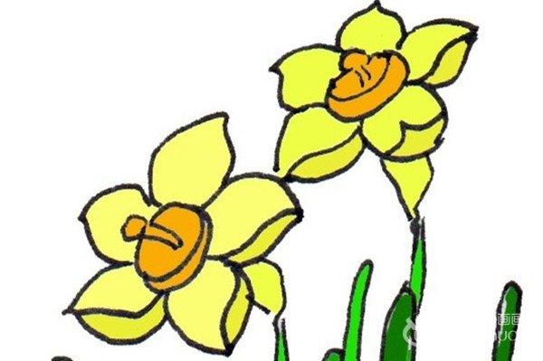 水粉植物画入门技法:水仙花的绘画步骤教程