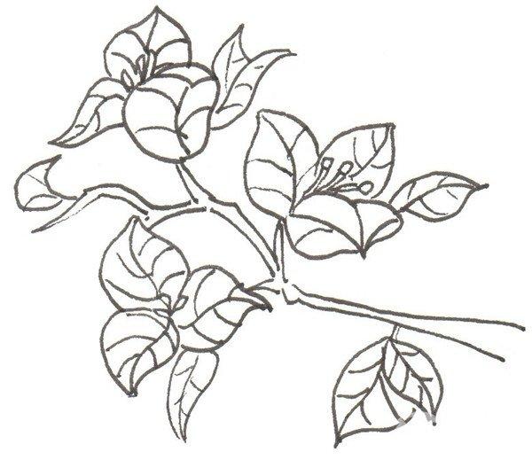 卡通画三角梅的绘画步骤五 ⑥从花朵开始上色.