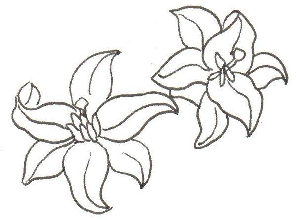 卡通画百合花的绘画步骤