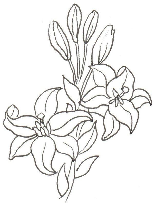 卡通画百合花的绘画步骤(2)