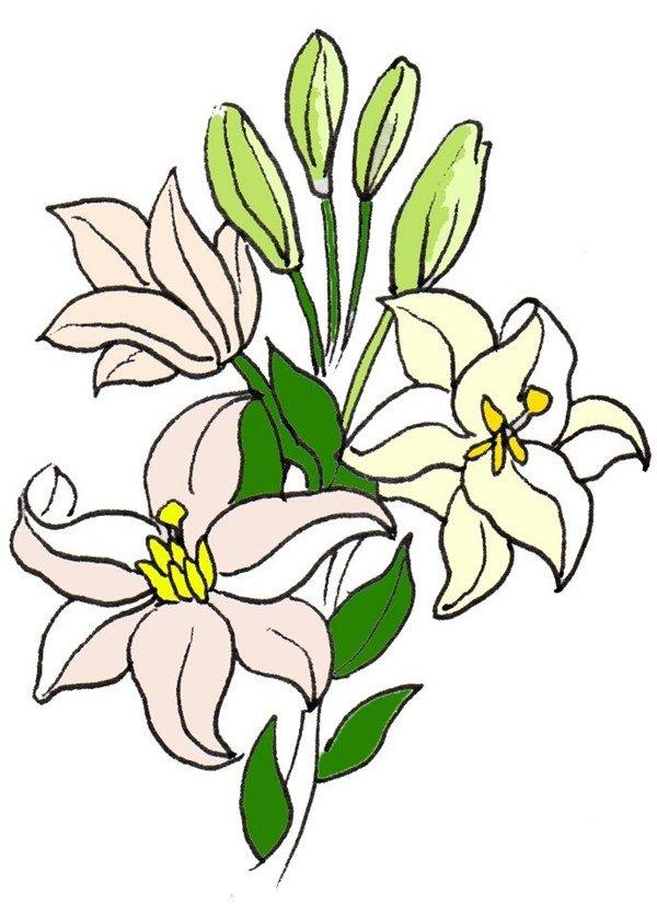 卡通画百合花的绘画步骤(4)