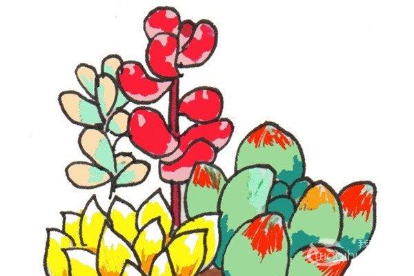 ①先画出一朵桃美人。  卡通画多肉的绘画步骤一 ②在桃美人的右后方画一朵乙女心。  卡通画多肉的绘画步骤二