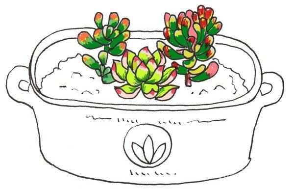 卡通画:多肉的绘画步骤 三(3)_儿童画教程_学画画_我