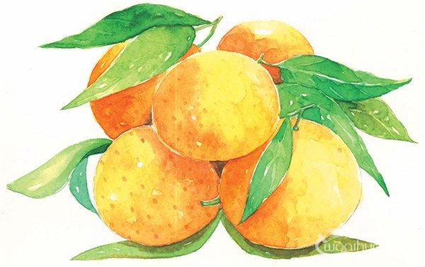 水彩画 水果 橘子