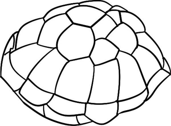 简笔画:游行的海龟                      海龟是龟鳖目海龟科动物的