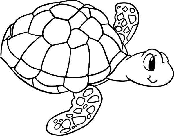 简笔画 海龟爪
