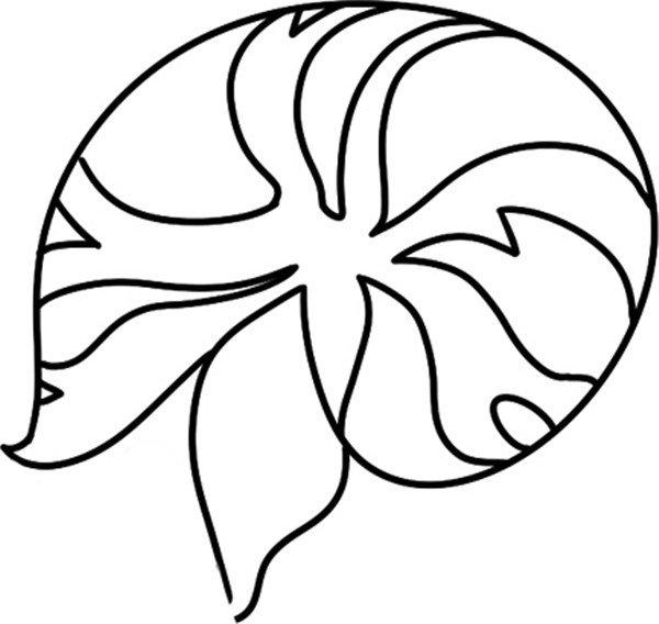 趣味简笔画:探出头的海螺绘画步骤(3)