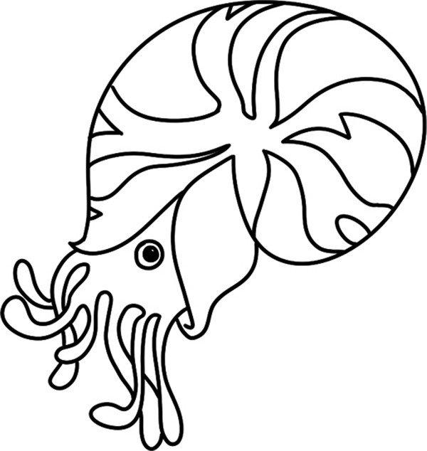 学画画 儿童画教程 简笔画 > 趣味简笔画:探出头的海螺绘画步骤(4)