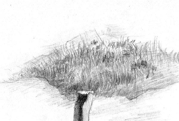 素描:后院雪景的绘画步骤(5)