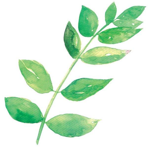 水彩画技法 > 水彩技巧树叶的绘制      树是随处可见的一类植物,它由
