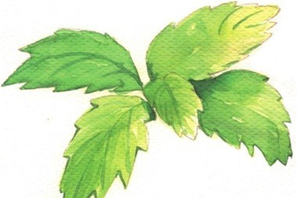 水彩技巧树叶的绘制
