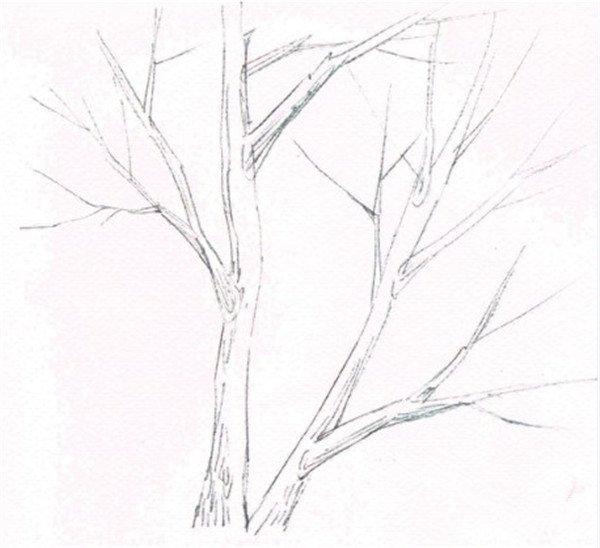 枯树简笔画步骤图
