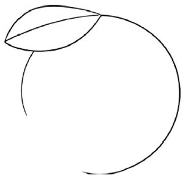 趣味简笔画:美味的橙子绘画步骤(2)