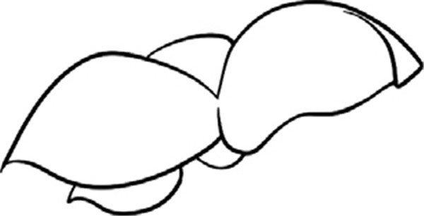 趣味 简笔画:小小的樱桃 绘画步骤    1,几片小叶子